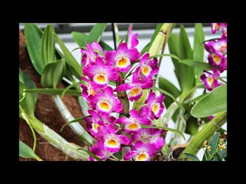 Orquideas. HD-3D. Arte y Jardinería Diseño de Jardines