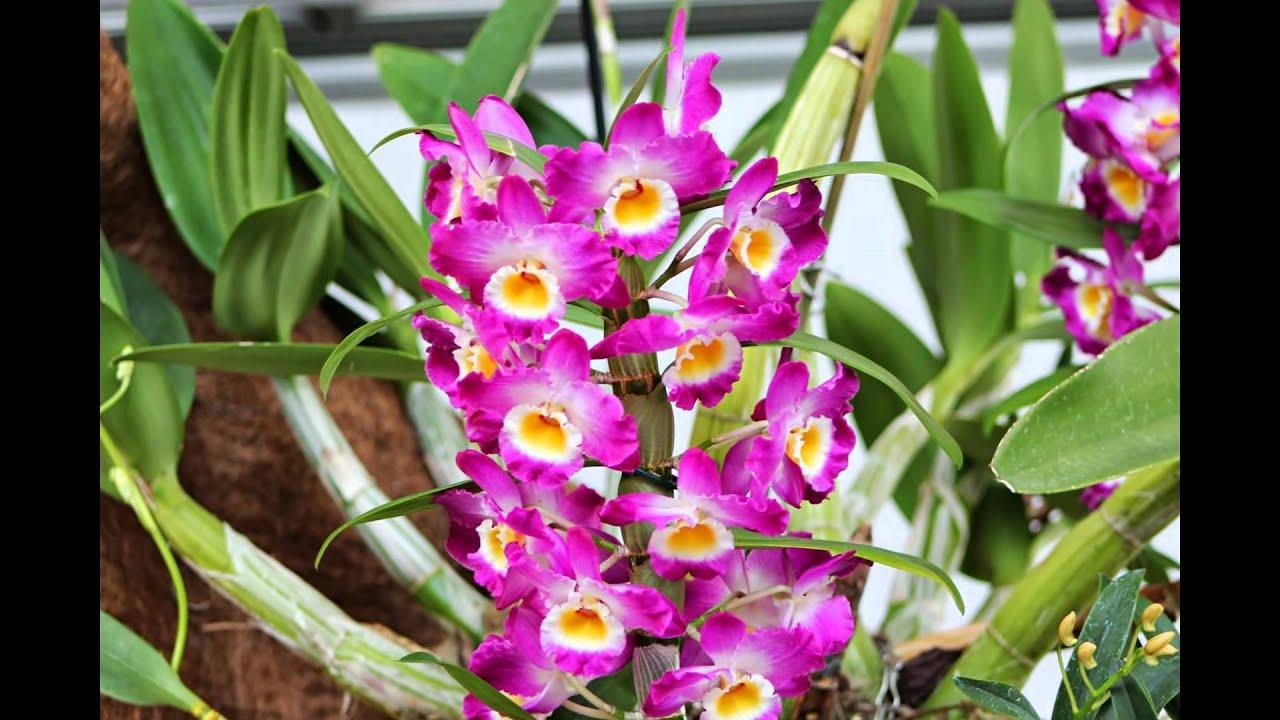 orquideas hd 3d arte y jardiner a dise o de jardines