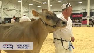 Suprême Laitier 2018    vache adulte JERSEY