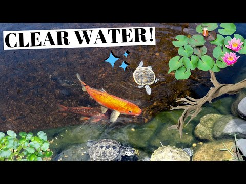 The SECRET To A CRYSTAL CLEAR POND!