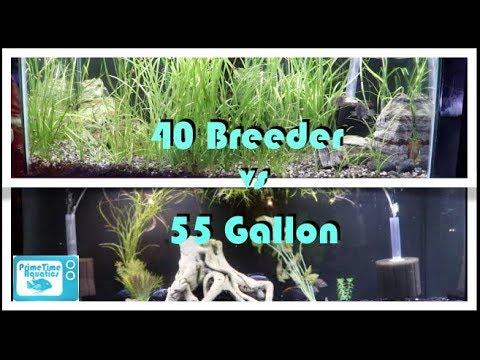 Fish Tank Showdown! 40 Gallon Breeder vs 55 Gallon Fish Tank: Which is Better?