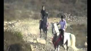 Download Video الخيل الاصيل الحصان لبيب والحصان حبيب احلى خيل MP3 3GP MP4