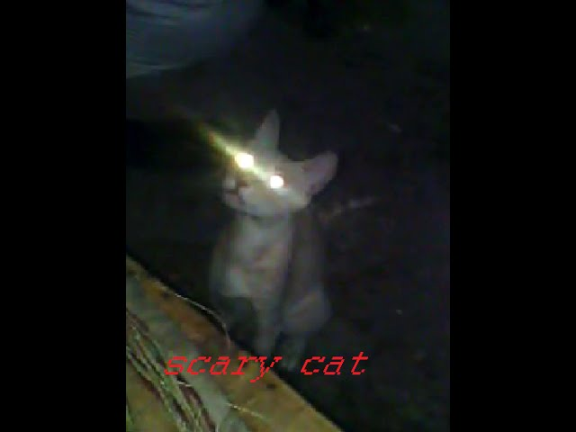 A cat with scary eyes radiate light - funny - scary animals