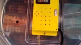 Tutorial incubator CLEO 5 з приводом повороту