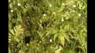 Ромашка - панацея.(, 2013-05-30T20:05:56.000Z)