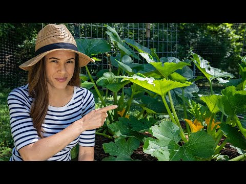 Download Zucchini Growing Tips I Wish I'd Known | Home Gardening: Ep. 5
