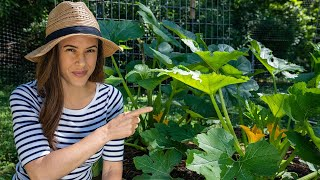 Zucchini Growing Tips I Wish I'd Known | Home Gardening: Ep. 5