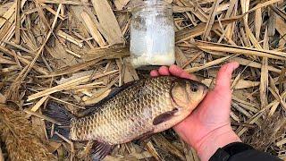 ЖОР у Карася на СЫРУЮ МАНКУ БОЛТУШКУ Рыбалка на поплавок веснои в камыше