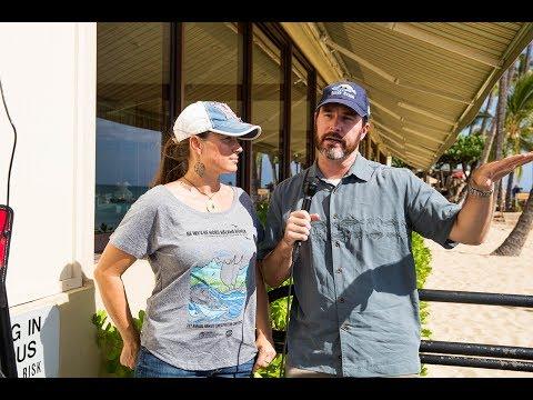 Hawaiian Monk Seal Q&A With NOAA Scientists