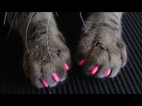 Накладки на ногти кошке