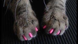 Клеим кошке силиконовые накладки на когти - антицарапки для  защиты обоев с Aliexpress