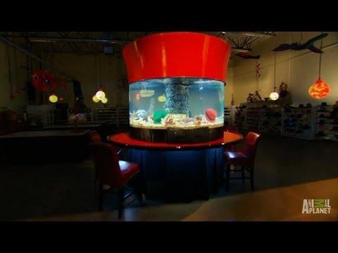 D Bar J Hats Custom Aquarium  Tanked