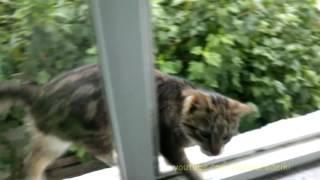 Кот просится домой