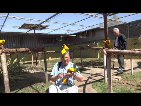Getting Swarmed by Parrots – Parrot Jungle – Benidorm