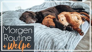 Morgenroutine mit Welpe | Foxred Labrador | 2 Hunde  | KaroLovesMilka