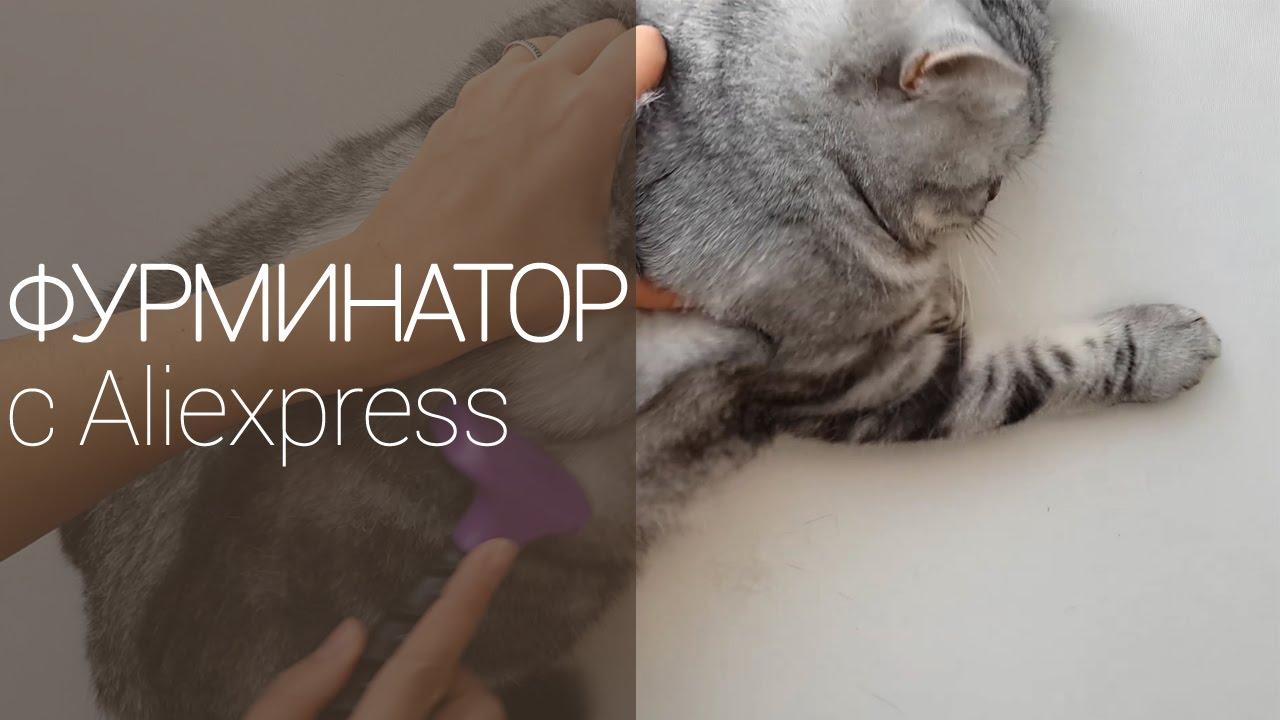 Шотландский кот обожает FURminator - YouTube