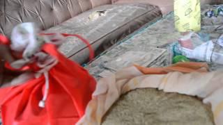 Jual Telur Jangkrik Murah Telpn 085646415014 - Pengeringan Telur Jangkrik