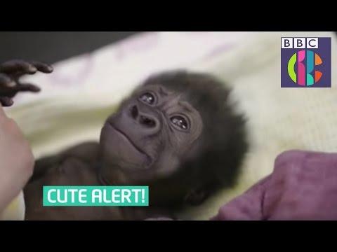 Cute animal news stories - CBBC