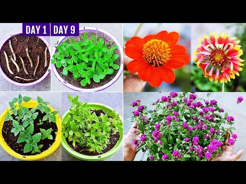 How to Grow Summer Flower Seeds FAST & What to GROW NOW