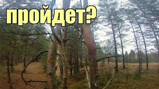 Лесной релакс, красивая природа под музыку, что еще нужно.