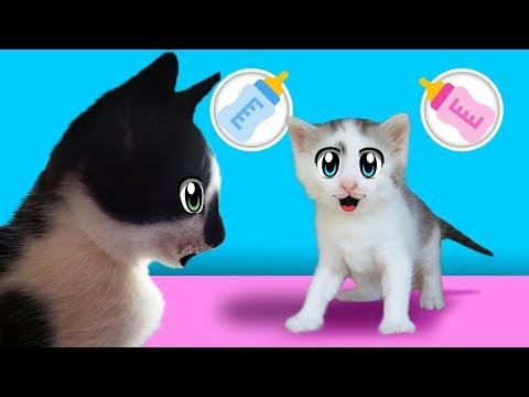 КОТ МАЛЫШ и его СЕКРЕТ ! КОШЕЧКА МУРЗЯ родила котенка   Дайте ИМЯ милашке ! ПРИВЕТ ОТ КРОЛИКА БАФФИ