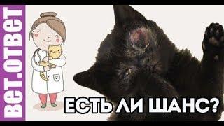 Можно ли вылечить котенка? ВетОтвет.
