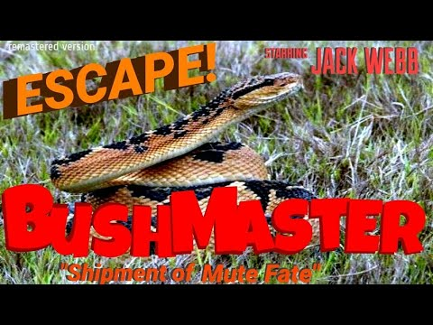 """JACK WEBB Has hands full! """"A Shipment of Mute Fate"""" • Famous episode of ESCAPE! • [remastered]"""