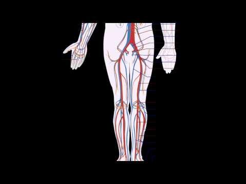 Повышенный гемоглобин: основные причины и симптомы