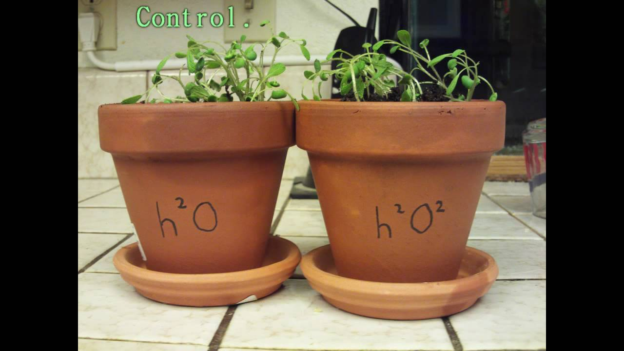 Plant Growth Experiment YouTube