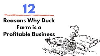 12 Reasons Why Duck Farm is a Profitable Business