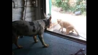 犬と猫の喧嘩.