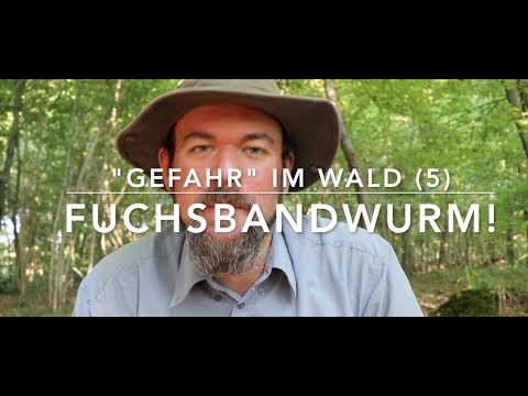 Fuchsbandwurm -