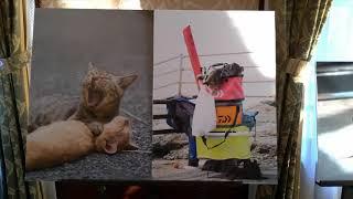 【猫写真家・森永健一写真展 ネコの矜持 Proud of cat 個展第3部 Version3】