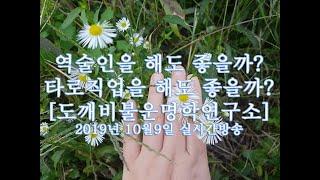 │주역│직업운 실시간방송│ 도깨비불운명학연구소