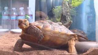 Step By Step Turtle Training
