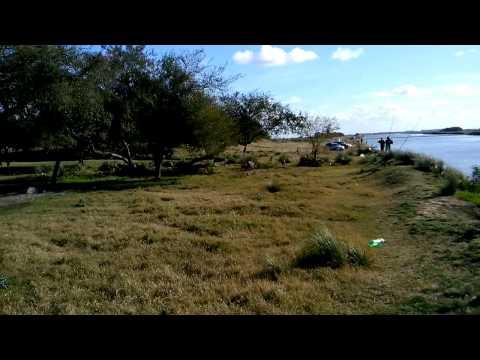 Chancho jabalí cazando nutrias en canal 15