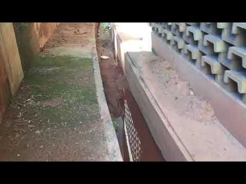 Veja flagrante de água parada e foco de dengue no Mineirinho, em BH
