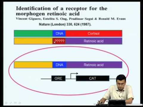Mod-06 Lec-22 Regulation of gene expression by type II nuclear receptors