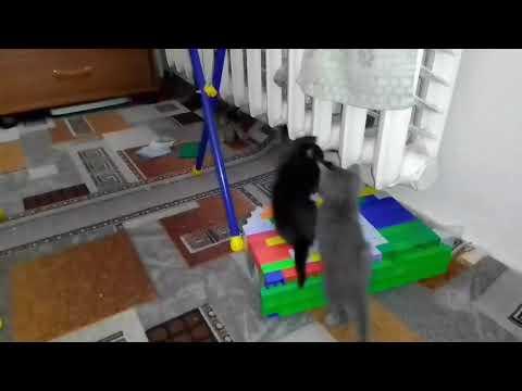 ТАЙНАЯ ЖИЗНЬ ДОМАШНИХ ЖИВОТНЫХ//чем занимаются котята