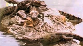Документальный фильм. Самые опасные животные. Морские глубины
