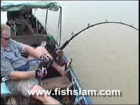 The largest Giant freshwater stingray brace ever captured whilst fishing in Thailand