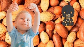 Изучаем орехи. Изучаем орехи с  ребенком. Познаем окружающий мир