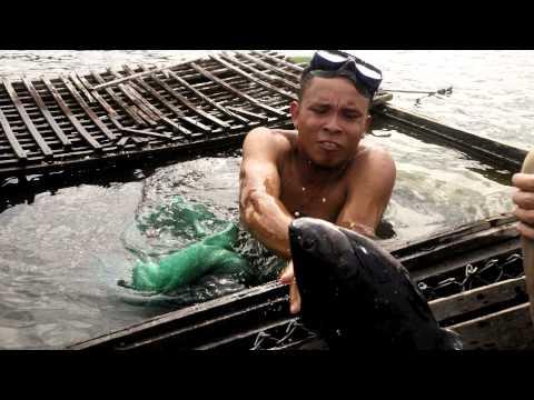 3 days deeper into Amazon / 3 dias em Amazônia