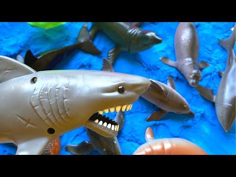 Learning the sound and name of Ocean Animals 해양 동물의 소리와 이름 배우기 #seaanimals, #animals, #kids,
