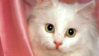 Мельница. Белая кошка.wmv