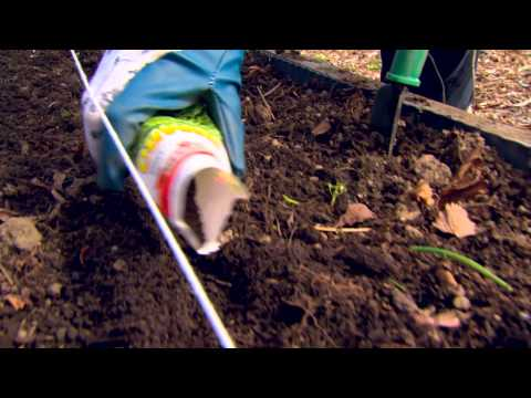 Garden Seeding Tips From Canadian Tire