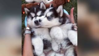 We are brothers. Funny Dog Videos. Funny Cats und Kittens Videos. F...