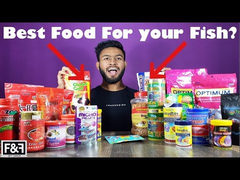 BEST FOOD FOR YOUR FISH