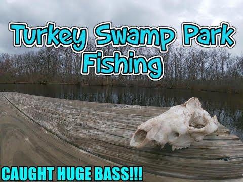 Turkey Swamp Park Bass Fishing