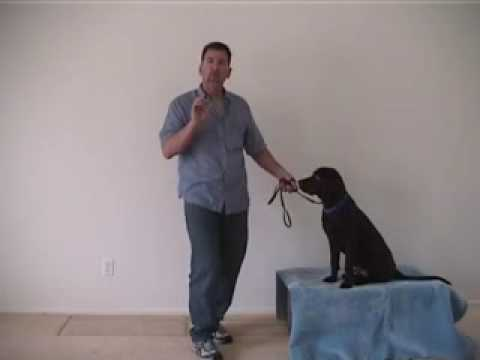 Teaching a dog to catch treats